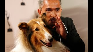 Cesar Millan Dead:famous Dog Trainer Dies Of Heart Attack A Hoax