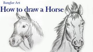 How to Draw a Horse Face with Pencil Easy Step by Step in Hindi