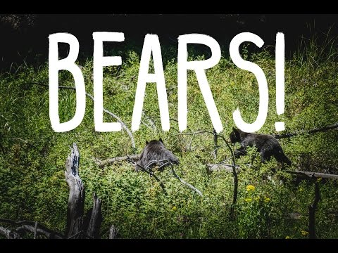 We found bears at Yellowstone! - VLOG008