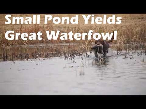 Small pond waterfowl from Saskatchewan S5 E9