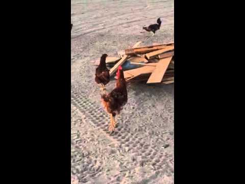 Cock block definition