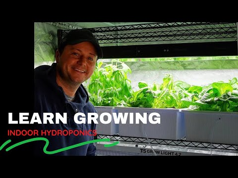 DIY Do It Yourself Hydroponics - Growing Lettuce Indoor - Gardening Organic