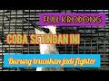 Coba Setingan Ini Bikin Burung Trucukan Tambah Fighter  Mp3 - Mp4 Download