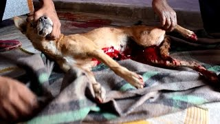 Dog bleeding to death saved just in time