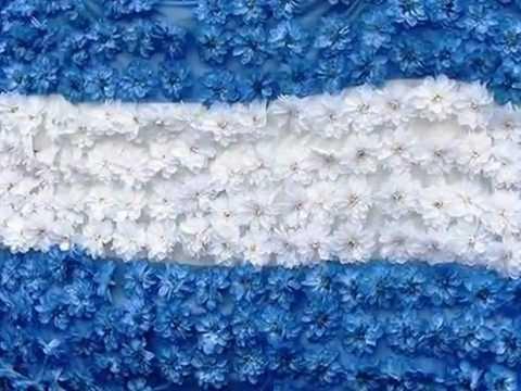 Quiero ver florecer a mi Bandera!! Argentina - YouTube
