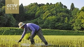 Japan voices concerns over TPP's impact on agriculture