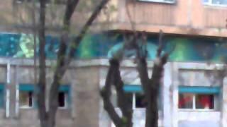 Almaty-Вырубка деревьев на Ауезова угол Жандосова!(Очередной пример обезображивания лиственных деревьев в Алматы!!!, 2011-04-24T09:13:39.000Z)
