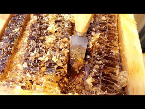 [홍대♡붕어빵] 벌꿀 아이스크림 붕어빵 (HONEY ICE CREAM BREAD) / KOREAN STREET FOOD / HONGDAE / 한국 길거리 음식 / 홍대 맛집