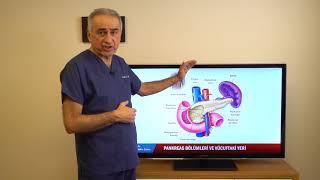 Pankreas anatomisi, pankreatit, tümörler ve Whipple ameliyatı