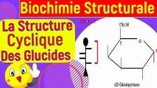 La structure cyclique et les propriétés chimique des oses, ainsi que la notion de chiralité