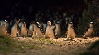 Penguin Foundation - Google Impact Challenge | Australia - Finalist