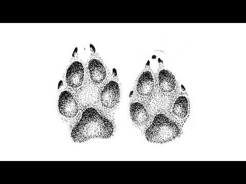 Как отличить волчий след от собачьего