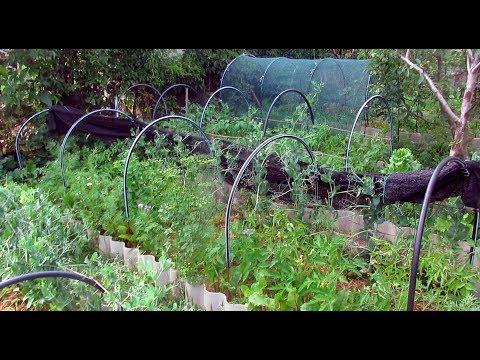 Как уместить огород на одной сотке