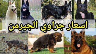 اسعار كلاب الجيرمن شيبرد 2020 والمواصفات والفرق بين المستويات والالوان وازاي تختار جرو صح