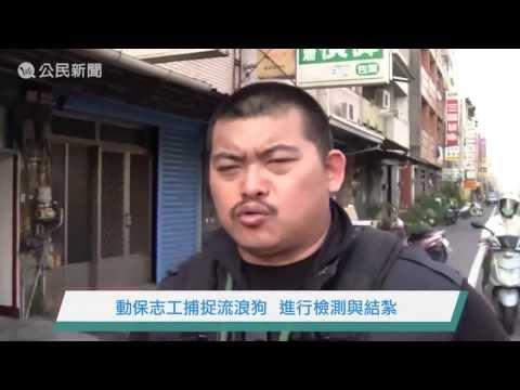 動保志工捕捉流浪狗進行TNVR-We公民新聞