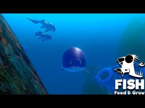 Feed And Grow Fish 43 - Parece Um Girino!!! (Deathmatch) (GAMEPLAY PT-BR)