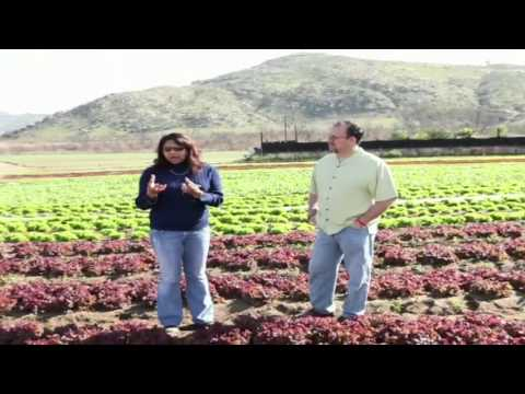 Be Wise Organic Farm in Southern California.m4v