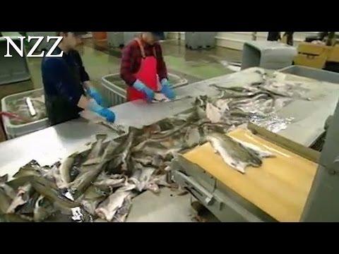 Der Mythos vom Fisch - Dokumentation von NZZ Format (1996)