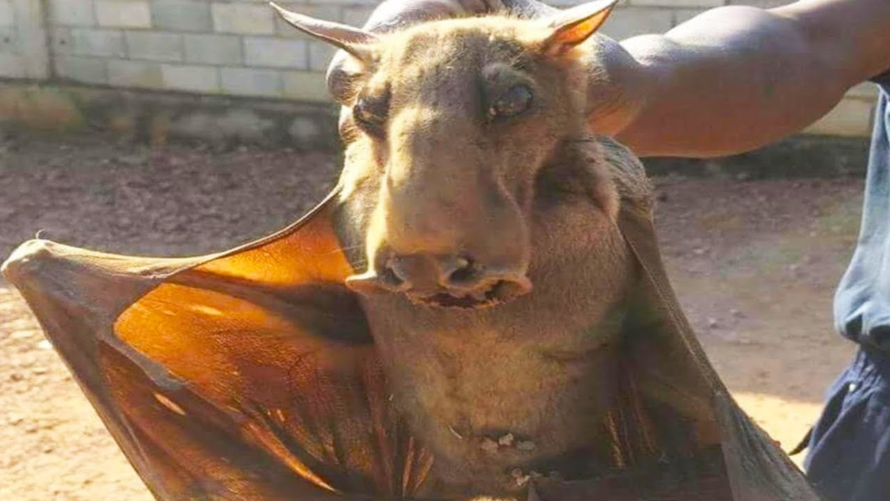 Download 15 Terrifying Creatures Recently Discovered