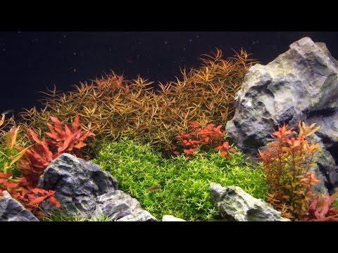 Optimizing CO2 in a planted tank