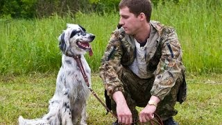 Межрегиональная 116-я Московская выставка собак охотничьих пород младший ринг сук