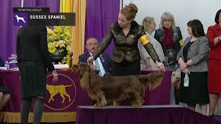 Spaniels (Sussex) | Breed Judging 2019