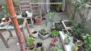 Winter Protection for Plants | Gardening in Winter | November-2016 (Urdu/hindi)