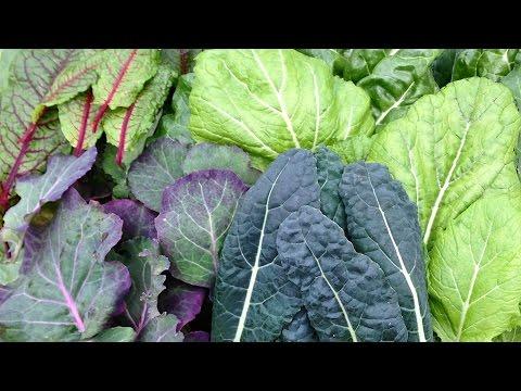Recipe: Organic Garden