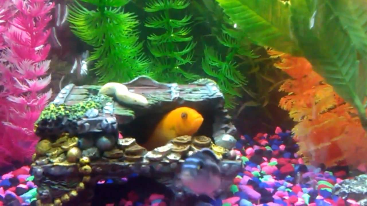 Colorful fish tank - YouTube