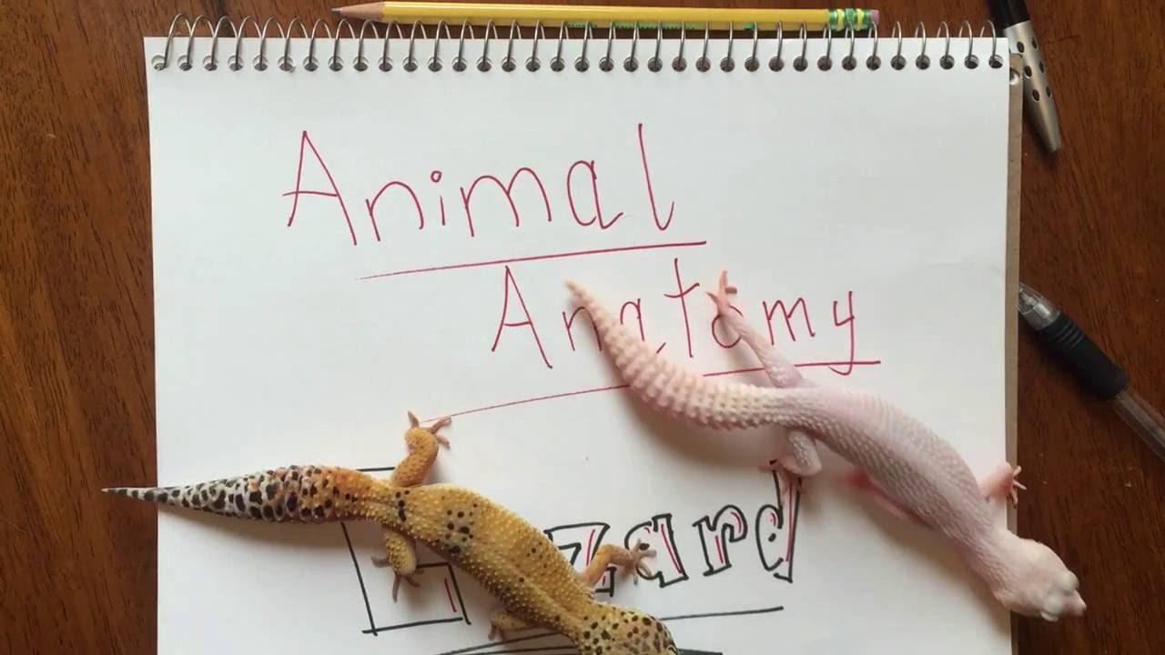 Animal Anatomy: Lizards - YouTube