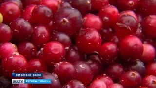 Неурожай дикоросов в Тюменской области не отразится на их цене