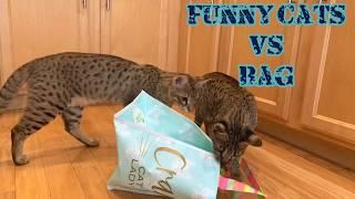 Funny Cats vs Bag/Funny Cat Video