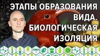 13. Этапы образования вида в ЕГЭ по биологии. Биологическая изоляция
