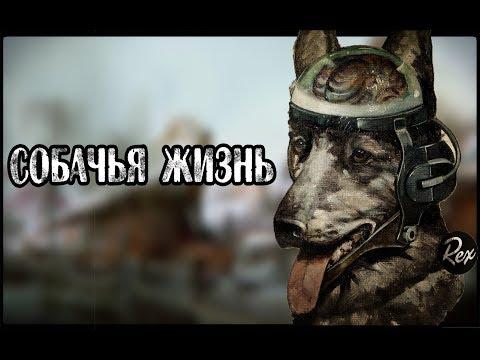 Fallout new vegas прохождение собачья жизнь