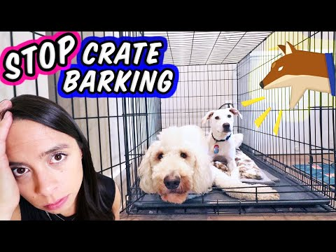 stop-puppy-crying-in-crate-🛑-how-to-crate-train-a-new-puppy!
