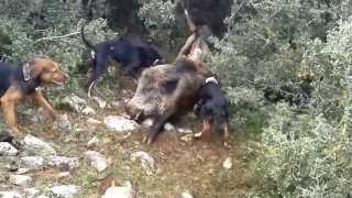 Orhangazi domuz avı Kırcalı