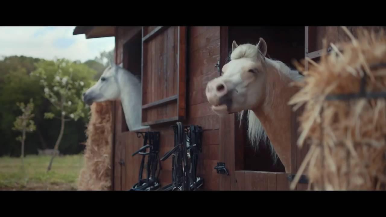 Pferde Youtube