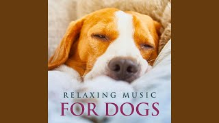 Peaceful Piano Music for Dogs