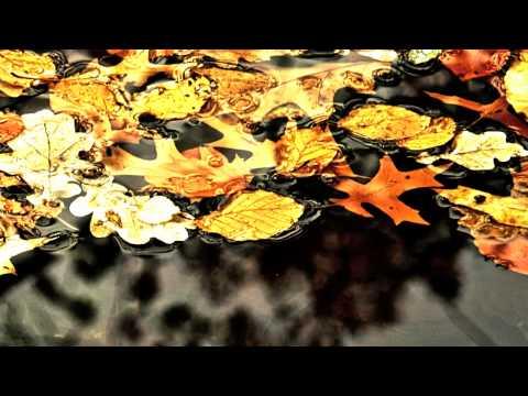 Michael Hoppe - Golden Leaves
