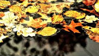 Michael Hoppe - Golden Leaves