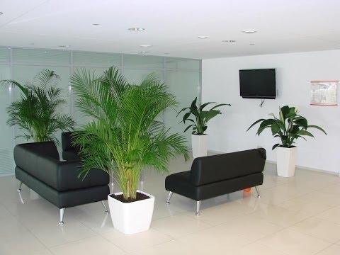 Растения для офиса.