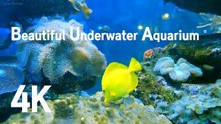4K  신비한 바다 수중 아쿠아리움˚ 고화질 자연 영상…