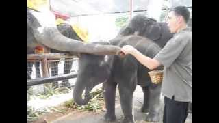 Darrell feeding the baby elephant with corn!