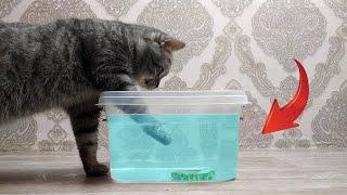 Кошки против Воды Смешное видео до слез Ржал полчаса