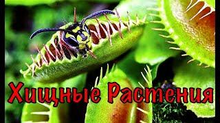 VLOG/Хищные растения !!! Кормлю насекомыми