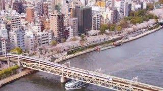 トワ・エ・モワ - みかんの花咲く丘