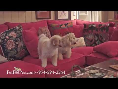 Wool oriental rug cleaning
