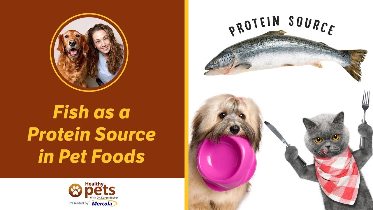 Fish as a Protein Source in Pet Foods