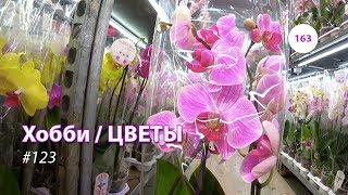 163#123 / Хобби Цветы / 03.2019 - JMP FLOWERS (МОСКВА). ОБЗОР