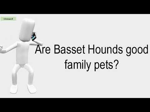 Are Basset Hounds Good Family Pets?